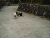 2006daifu2_212
