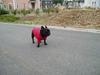 2006daifu2_285