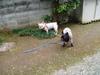 2006daifu2_389
