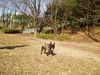 2006daifu2_456