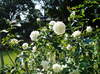 2007daifu5_165