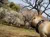 2008daifu1_145