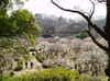 2008daifu1_149