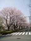 daidai14_107