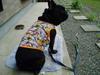 Daidai20060307_239