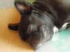 Daidai20060730_006